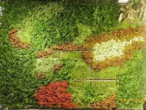 Bitki Duvarı.Vertical Garden Akmerkez İSTANBUL